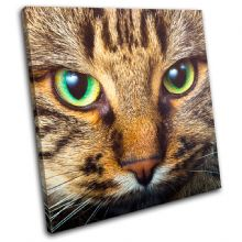 Cat Face Animals - 13-1316(00B)-SG11-LO